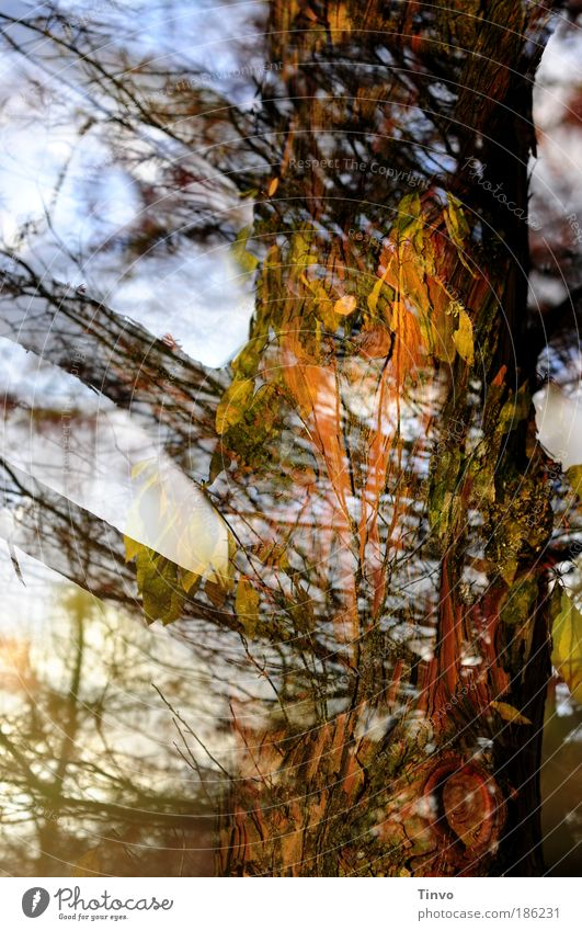 Nature Tree Leaf Forest Life Autumn Park Energy Uniqueness Exceptional Infinity Mysterious Tree trunk Chaos Double exposure Surrealism
