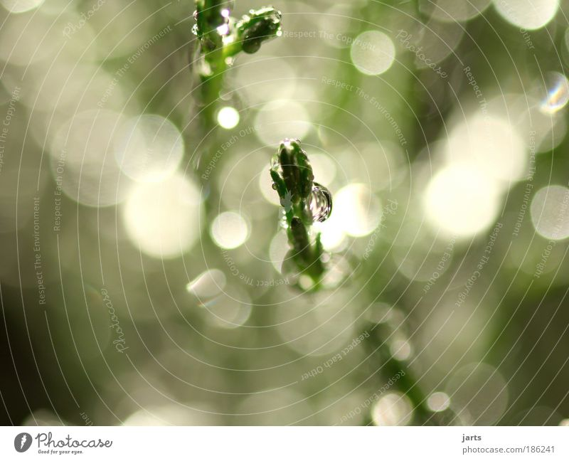 Nature Water Green Calm Bright Glittering Environment Drops of water Wet Fresh Bushes Natural Beautiful weather Sunbeam