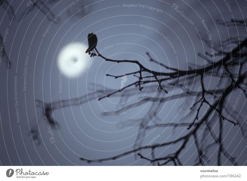 last night, scary guaranteed. Exotic Night life Night watchman vampire teeth Art Nature Moon Full  moon Winter Lime tree Branch wehrwolf Wolf yowl Sign Hunting