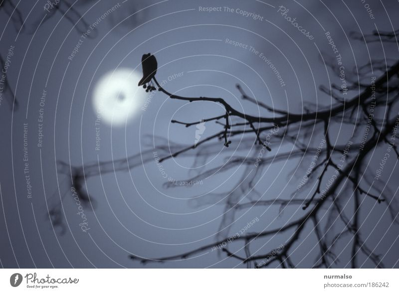 Nature Winter Cold Art Crazy Branch Sign Fear of death Creepy Hunting Exotic Scream Moon Aggression Expectation Night life