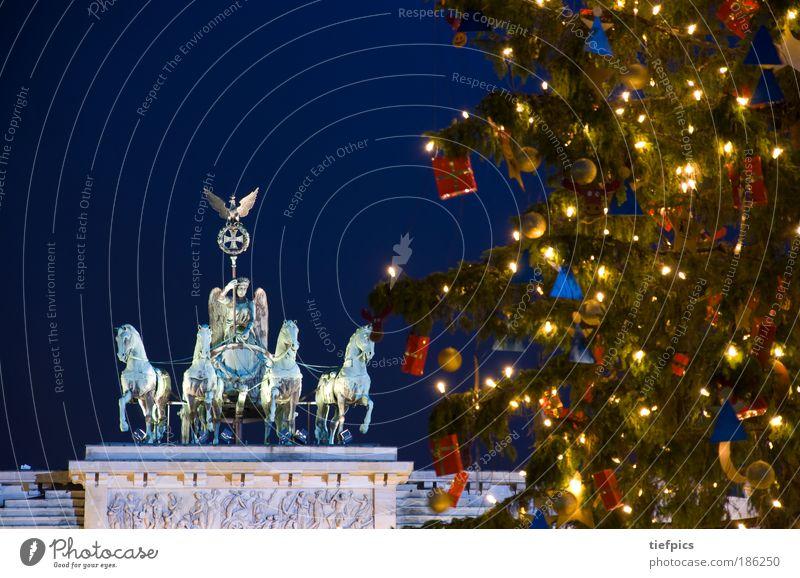 Christmas & Advent Tree Winter Germany Berlin Religion and faith Plant Transport Lighting Gift Horse Europe Peace Christmas tree Fir tree