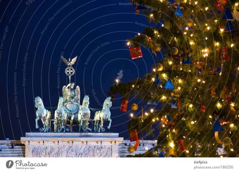 Merry christmas. Winter Tree Capital city Tourist Attraction Landmark Ornament Anticipation Peace Brandenburg Gate Berlin Old Testament night Christmas tree