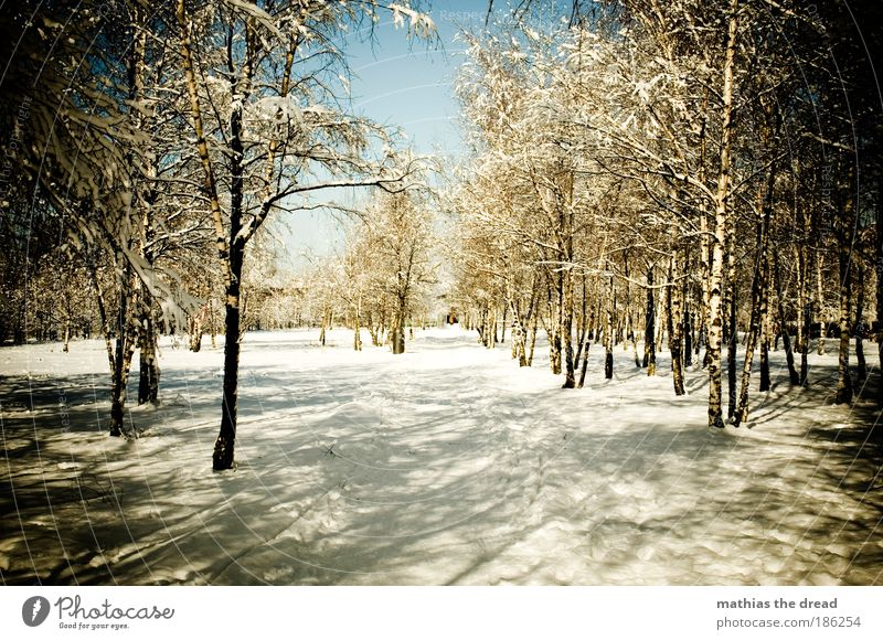 BIRKENWÄLDCHEN Environment Nature Landscape Plant Water Winter Beautiful weather Ice Frost Snow Tree Birch tree Park Forest Deserted Passenger traffic