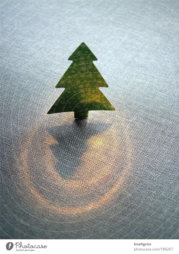 Oh, you cheerful... Tree Christmas tree Illuminate Stand Glittering Gold Gray Green Happiness Anticipation Expectation Desire Christmas & Advent Lighting Flare
