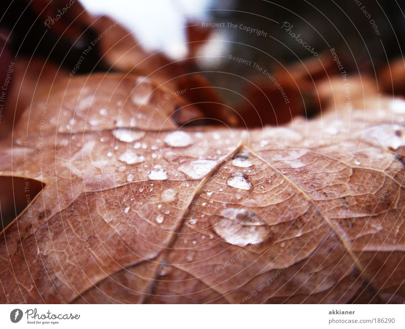 Nature Plant Water Sun Leaf Environment Autumn Brown Park Rain Weather Drops of water Wet Beautiful weather Elements Rachis