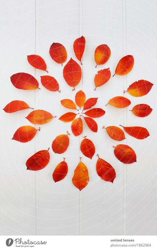 Red Leaf Autumn Art Design Orange Esthetic Many Autumn leaves Autumnal Work of art Symmetry Fashioned Autumnal colours Early fall Autumnal weather
