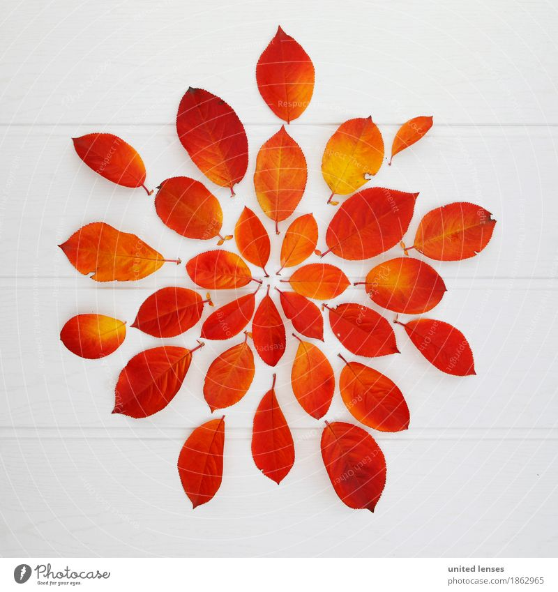 AK# Autumn Star Art Work of art Esthetic Autumnal Autumn leaves Autumnal colours Early fall Autumnal weather Automn wood Autumn wind Leaf Leaf canopy