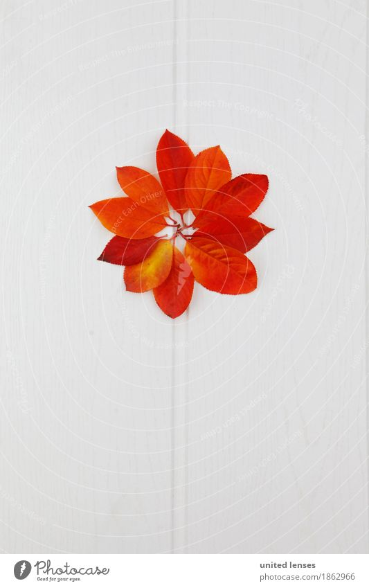 AK# Leafflower Art Work of art Esthetic Autumn Autumnal Autumn leaves Autumnal colours Early fall Autumnal weather Autumn wind Pattern Symmetry Home-made Design