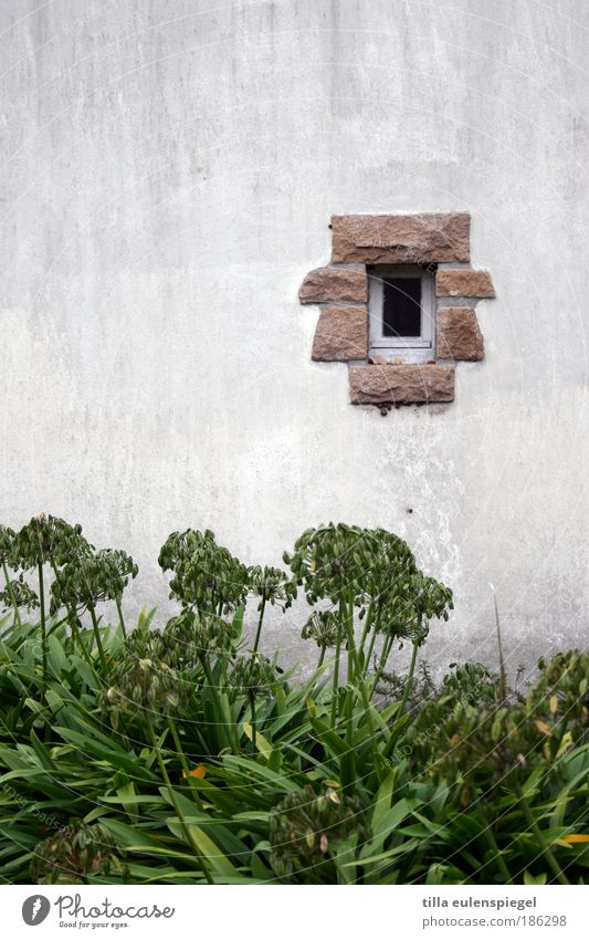 White Green Plant Autumn Wall (building) Window Garden Stone Wall (barrier) Island Hut France Hollow Section of image Minimalistic Horticulture