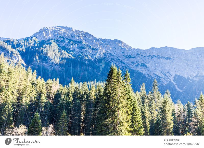 Nature Plant Tree Landscape Mountain Love Autumn Rock Hiking Beautiful weather Peak Alps Snowcapped peak Breathe