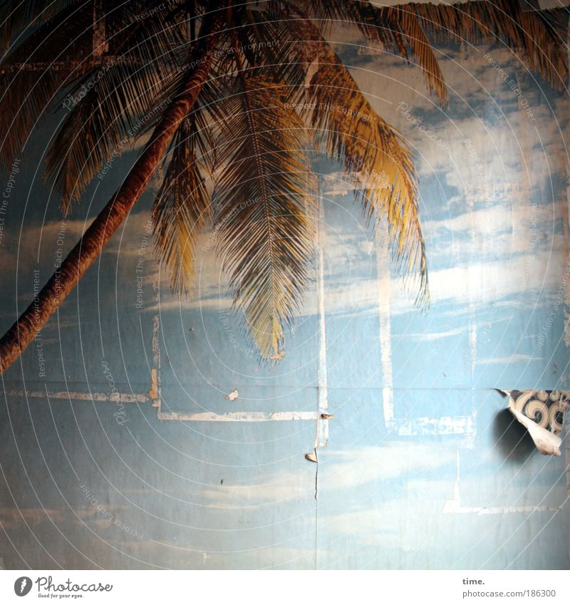 Cracks in paradise Wall (barrier) Wall (building) Design Dream Landscape Park Moody Together Romance Curiosity Photography Wallpaper Photo wallpaper Palm tree