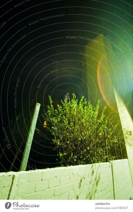 Night again November Wall (barrier) House (Residential Structure) Tenant Landlord Window Window transom and mullion Wall (building) Evening Dark Darken Tree