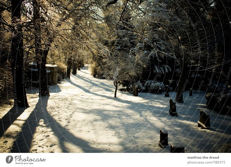 Nature Beautiful Plant Tree Calm Landscape Winter Forest Cold Environment Snow Sadness Death Lanes & trails Ice Park