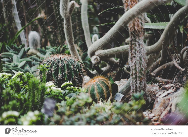 cactus landscape Exotic Healthy Environment Nature Plant Bushes Cactus Blossom Foliage plant Dedication Attentive Fear Thorn Complex Collection
