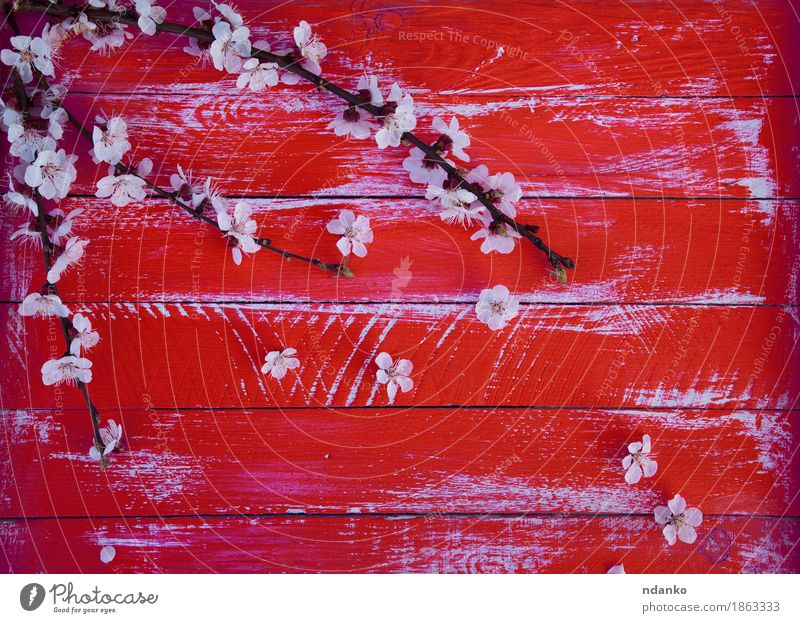 branch of cherry blossoms without leaves Nature Flower Blossom Wood Fresh Bright Natural Red White Cherry blooming Blossom leave worn vintage spring Plank