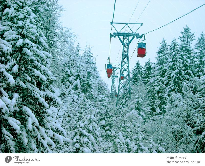 Red Winter Cold Mountain Fir tree Winter sports Means of transport Winter vacation Ski resort Gondola Coniferous forest Cable car Virgin snow Winter forest