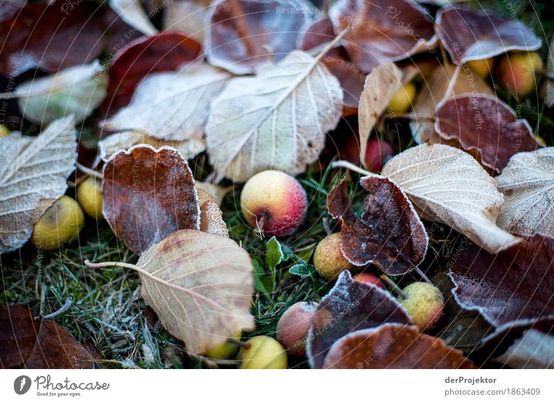 Frosty Falling Fruit Vacation & Travel Tourism Trip Adventure Hiking Environment Nature Landscape Plant Autumn Beautiful weather Ice Agricultural crop Meadow
