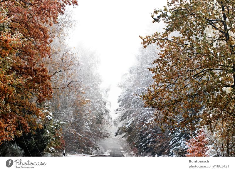 Nature Vacation & Travel Plant Tree Landscape Winter Forest Street Cold Lanes & trails Snow Tourism Weather Ice Hiking Idyll