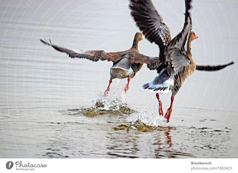 Nature Water Animal Environment Flying Bird Wild animal Attachment Duck Duck birds