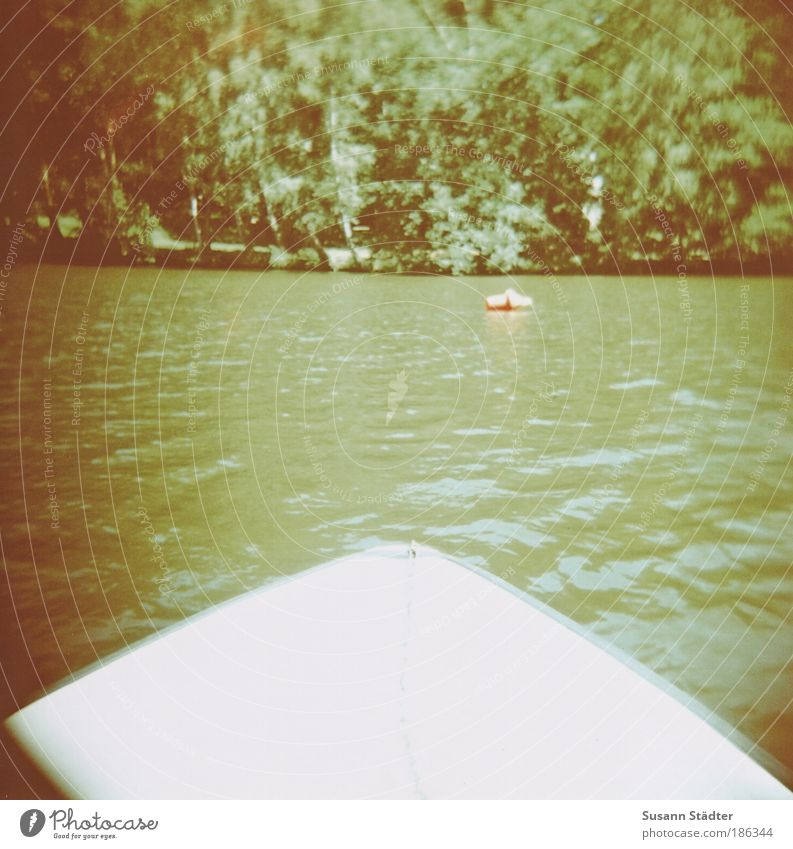 Water Old Tree Green Plant Forest Jump Dream Lomography Warmth Lake Waves Swimming & Bathing Bushes Saxony Idyll