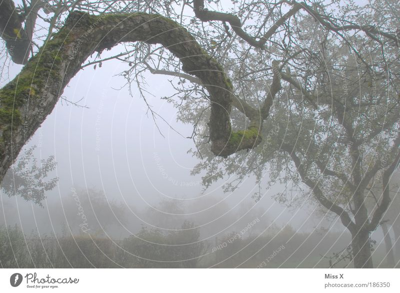Nature Old Winter Loneliness Forest Dark Cold Autumn Garden Tree Moody Fog End Branch Transience