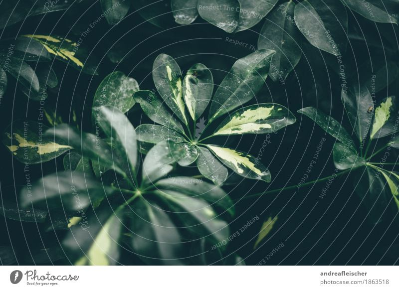 A breath of jungle Environment Nature Plant Leaf Foliage plant Park Relaxation Greenhouse Botanical gardens Lime Yellow Mystic Calm Dirty Bushes Leaf green