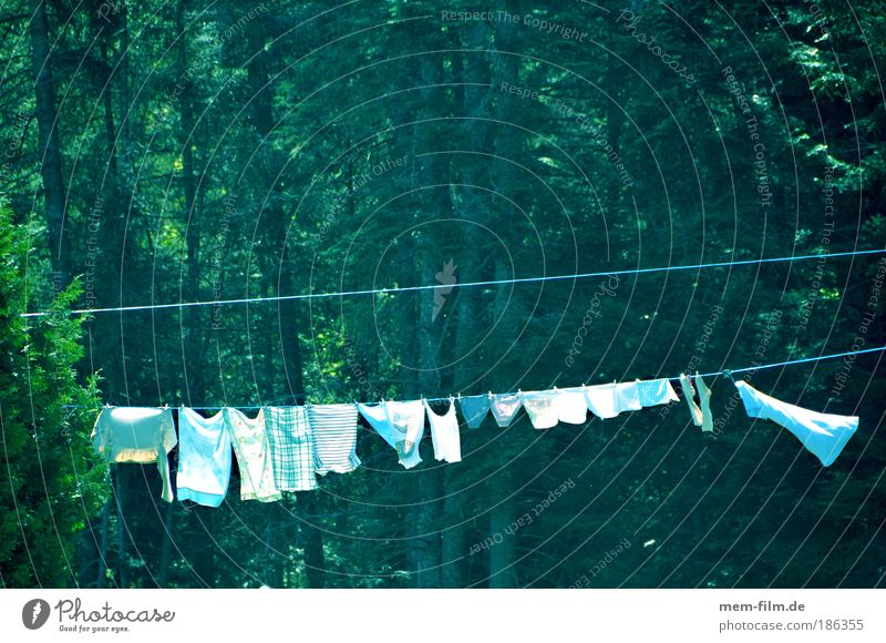 90 GRAD Laundry Dry White white linen Rope Clothesline Washing Cleaning Household Pure Nature Tree Forest Hang up Sunlight Beautiful weather Green Washing day