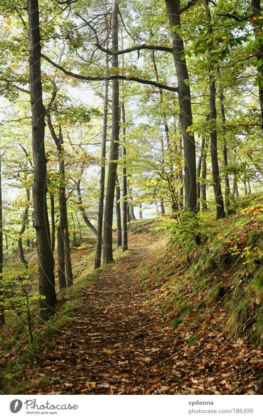 Nature Beautiful Tree Calm Far-off places Forest Life Relaxation Autumn Freedom Dream Lanes & trails Landscape Contentment Environment Time