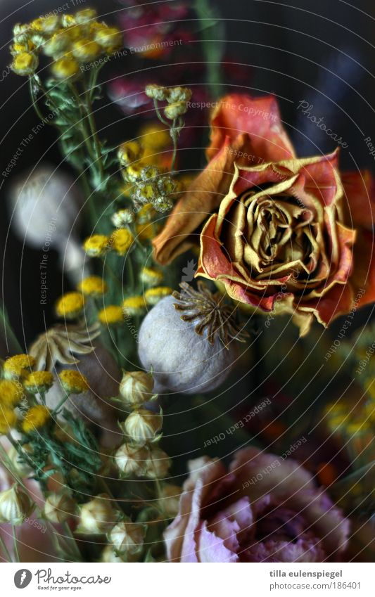 Nature Flower Colour Dark Rose Decoration Transience Natural Decline Poppy Bouquet Faded Cloth Dusty To dry up Linen
