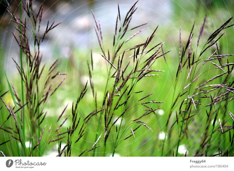 Nature Vacation & Travel Plant Summer Sun Landscape Mountain Environment Life Meadow Grass Freedom Contentment Happiness Trip Joie de vivre (Vitality)