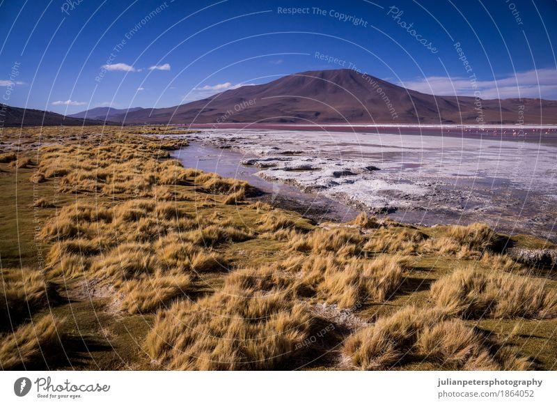 Laguna Colorada in Bolivian Altiplano Vacation & Travel Mountain Nature Landscape Grass Lake Yellow Pink Red Colour laguna colorada altiplano bolivian de