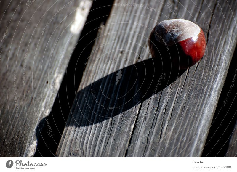 cast shadow Plant Autumn Park To fall Lie autumn holidays Bench Chestnut Wood Shadow Black Brown Round Ball Rustic Old Colour photo Exterior shot