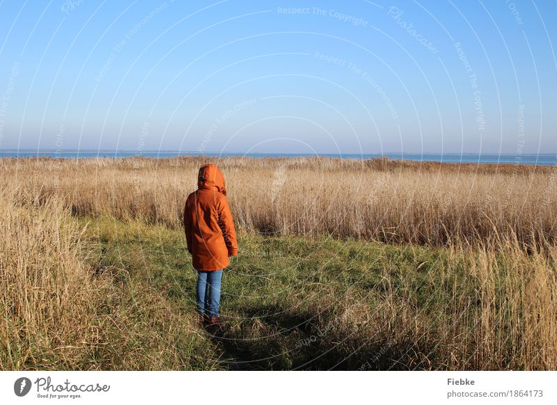 boddenblick Relaxation Calm Feminine Young woman Youth (Young adults) 1 Human being Nature Landscape Water Cloudless sky Horizon Autumn Beautiful weather Fern