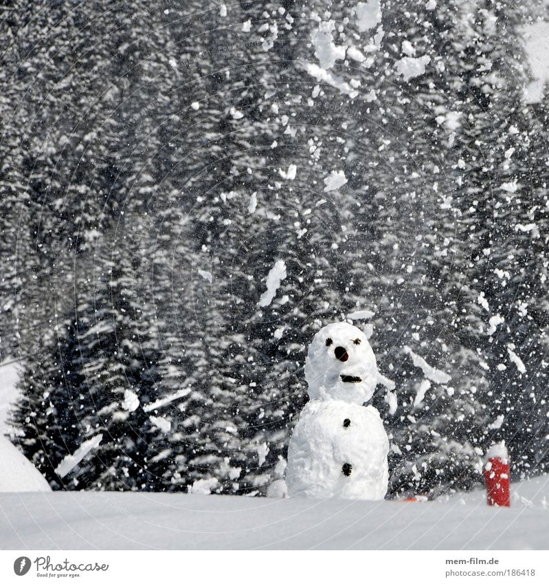 Snow, man! Christmas & Advent Winter Snowman Cold Snowfall Man chafe Children's game Mountain Switzerland Austria Vacation & Travel Winter vacation Eyes Nose