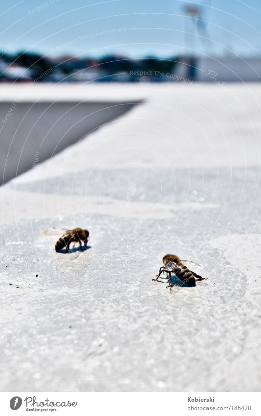 All humans are corruptible, says the wasp to the bee Navigation Harbour Animal Wasps 2 Discover To feed Authentic Blue Gold White Contentment Threat Competition
