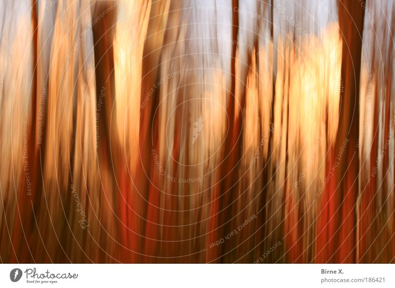 magic forest Environment Nature Landscape Plant Autumn Tree Forest Fear blurred tree trunks Colour photo Exterior shot Experimental Abstract Deserted Evening