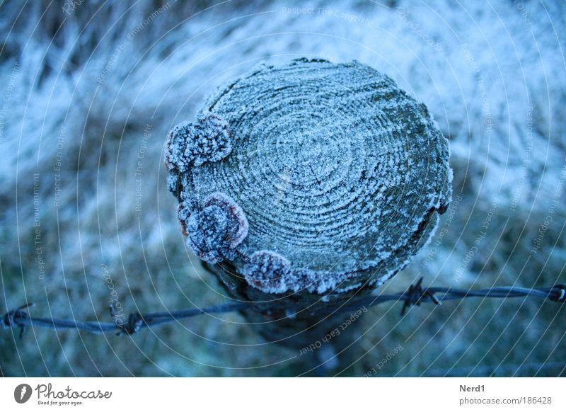 Blue Tree Winter Cold Ice Frost Frozen Mushroom Hoar frost Barbed wire fence Fence post Annual ring Cross-section