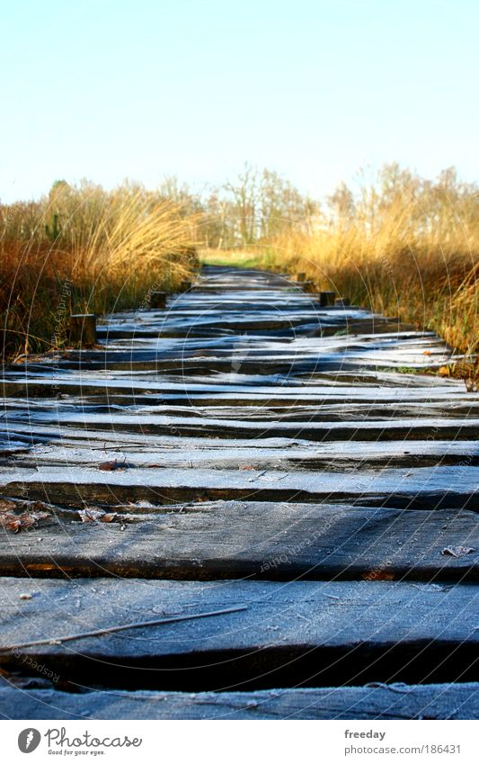 ::: Holzweg ::: Environment Landscape Weather Ice Frost Grass Bushes Bog Marsh Lake Bridge Lanes & trails Going Cold Calm mire trail Footbridge Wooden board