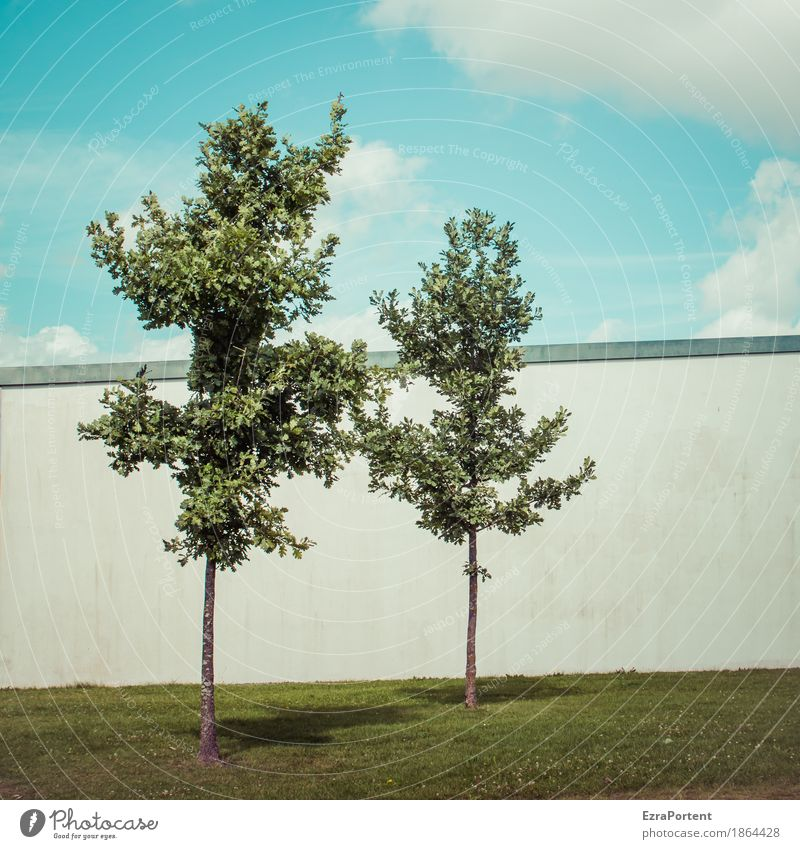 twins Environment Nature Sky Clouds Climate Plant Tree Grass Wall (barrier) Wall (building) Facade Line Blue Gray Green White Sympathy Together Attachment 2