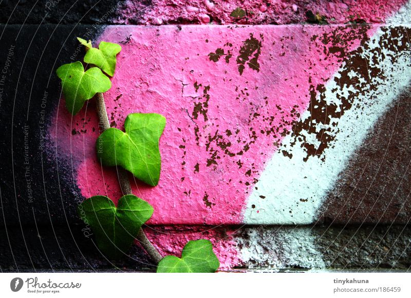 Ivy on Graffiti Youth culture Subculture Plant Wall (barrier) Wall (building) Rebellious Green Pink Black White Willpower Colour photo Exterior shot Close-up