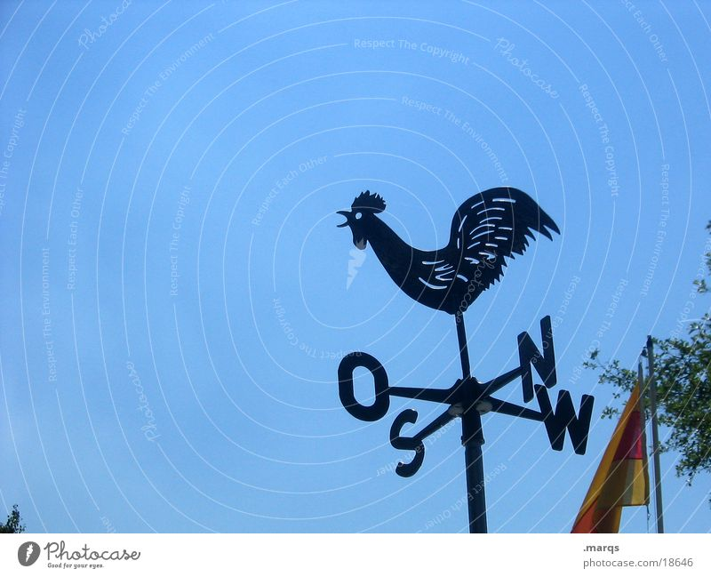weathercock Cloudless sky Weather Wind Weathercock Sign Blue Black Rooster East South North West Compass point Colour photo Exterior shot Copy Space left