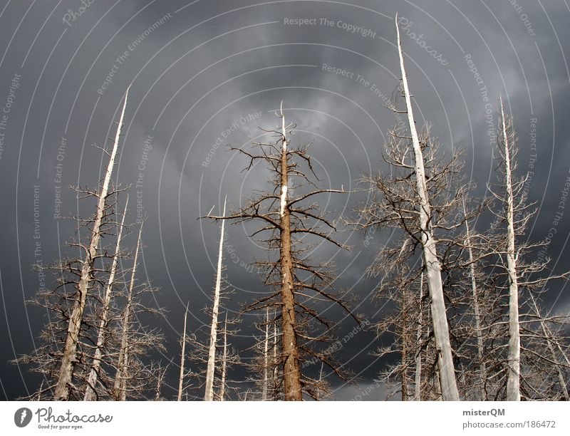 Nature Tree Forest Dark Death Environment Wood Gloomy Industry Threat Transience Shadow Storm Thunder and lightning Environmental protection