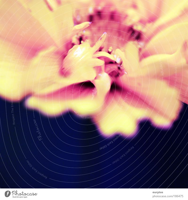 Nature Flower Plant Red Summer Yellow Blossom Spring Holga Pink Environment Macro (Extreme close-up) Esthetic Lomography Violet Exotic