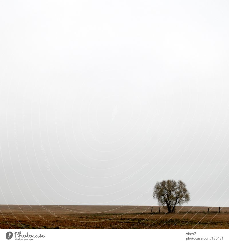 Beautiful Sky Tree Plant Calm Clouds Far-off places Dark Relaxation Autumn Meadow Landscape Moody Brown Field Weather
