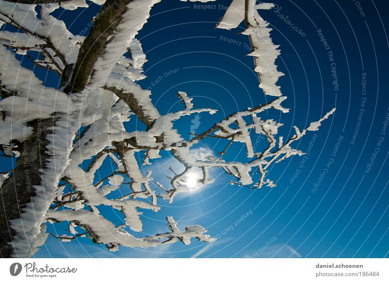 Nature Sky White Tree Sun Blue Winter Snow Ice Weather Environment Frost Climate Beautiful weather Climate change Cloudless sky