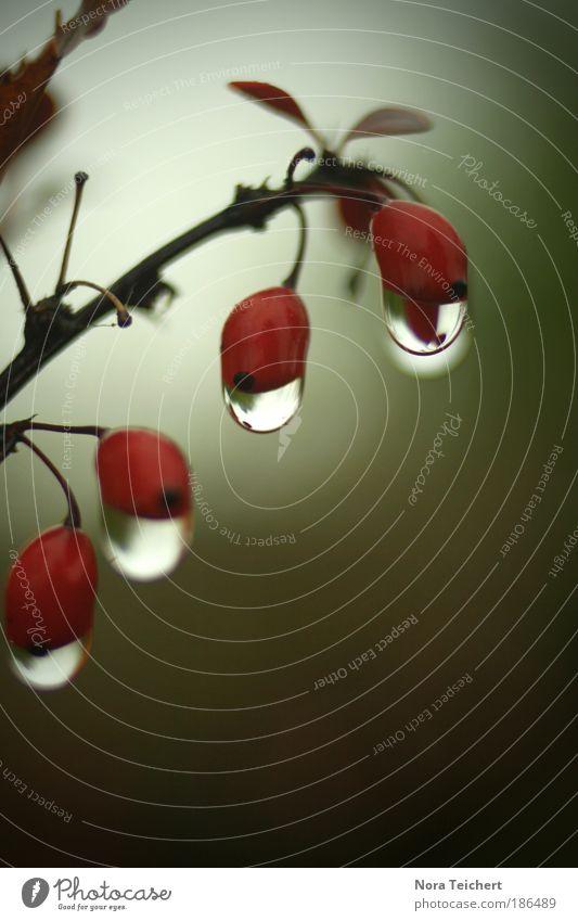 Nature Red Plant Leaf Loneliness Environment Landscape Autumn Blossom Sadness Dream Park Time Rain Crazy Bushes
