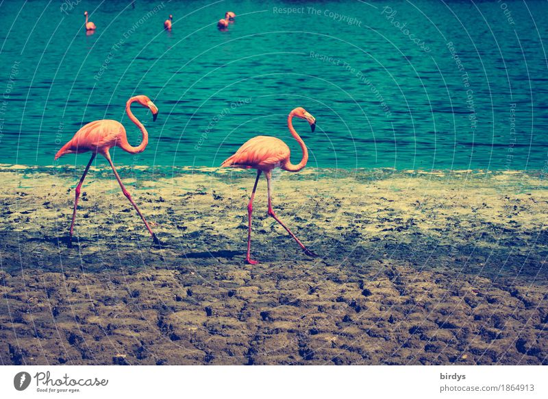 Nature Blue Colour Animal Natural Movement Brown Going Pink Free Earth Pair of animals Elegant Esthetic Beautiful weather Lakeside