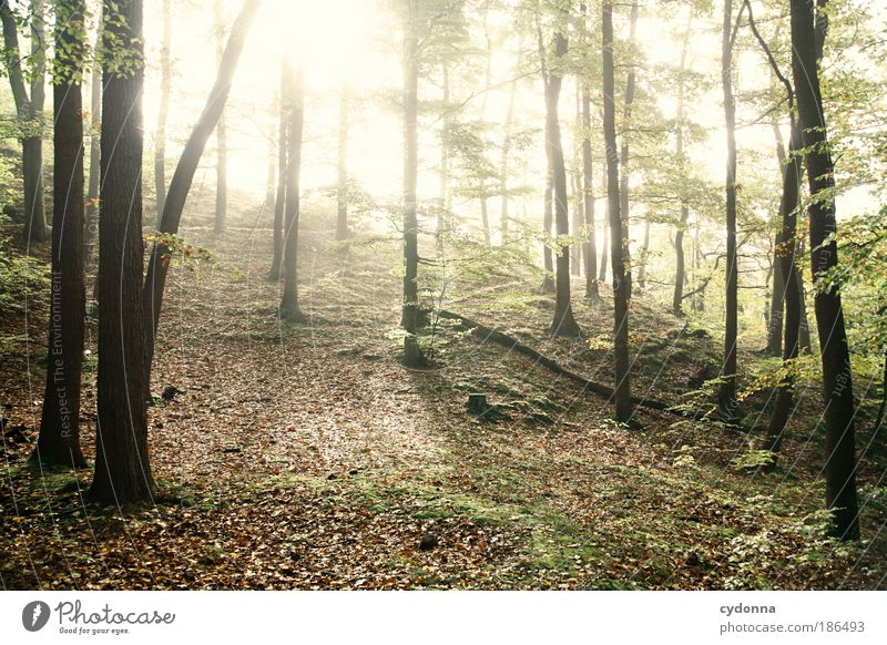 Nature Tree Calm Forest Life Relaxation Freedom Dream Lanes & trails Landscape Bright Power Environment Time Energy Change