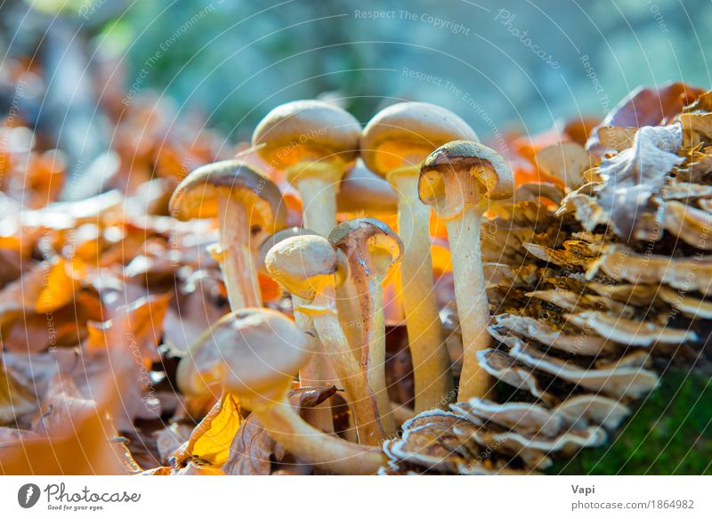 Group of mushrooms Vegetable Organic produce Vegetarian diet Nature Plant Autumn Grass Leaf Wild plant Forest Growth Fresh Delicious Natural Brown Yellow Green
