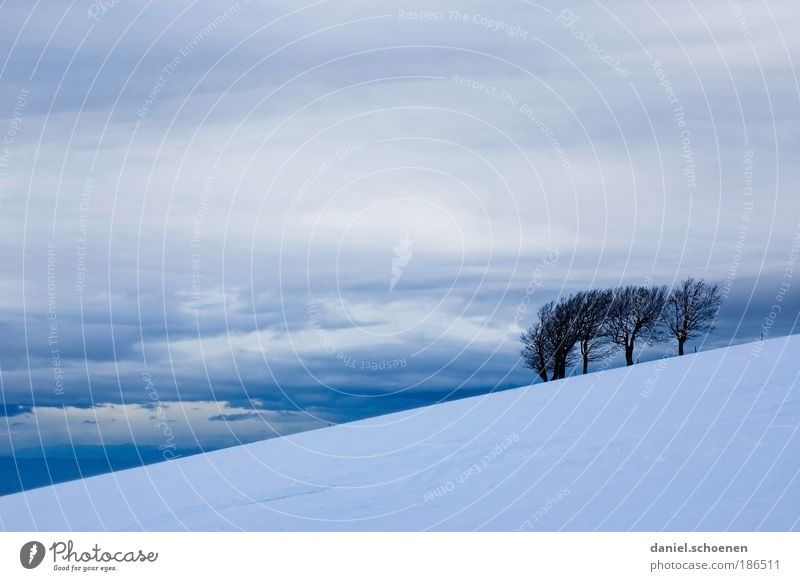 Sky White Tree Blue Winter Clouds Snow Mountain Gray Landscape Ice Wind Weather Frost Climate Gale